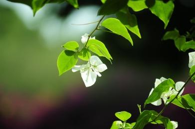 nature-photos-857956_1920