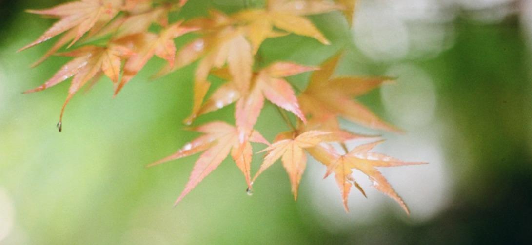 autumn-945000_1920