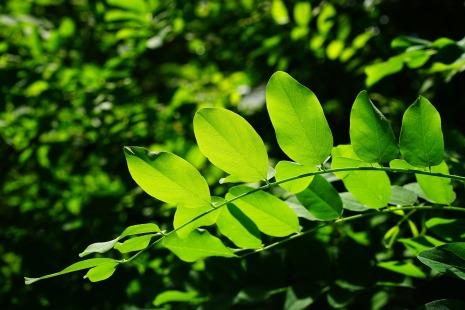 leaves-829513_1920